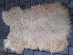 swiss walliser schwarznase sheep fleece