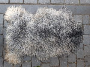 Swedish gotland Pels sheep fleece